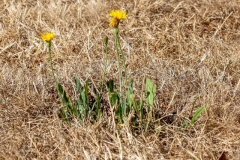 Flower in Drought